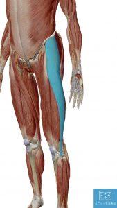 「大腿筋膜張筋 マッサージ」の画像検索結果